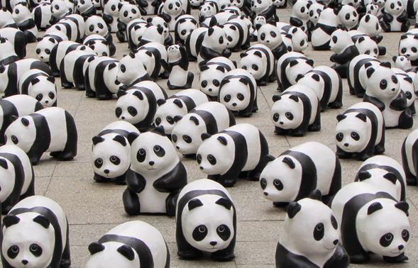 Moltitudine di panda